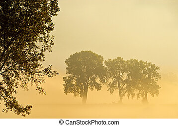 Surreal Morning - Morning mist in field with trees ,...