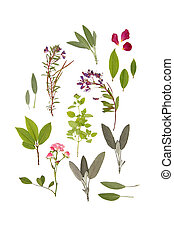 Herbs and Flowers of Summer - Abstract arrangement of...