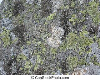 lichen on the stone