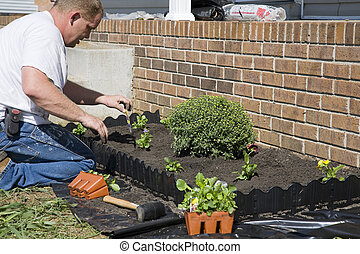Working in garden - Man planting flowers in garden, dressing...