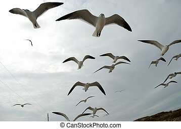 Flying seagulls on the beach of Padre Island, Texas