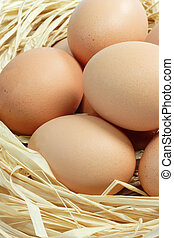 Fresh Brown Eggs - Many fresh brown eggs composition