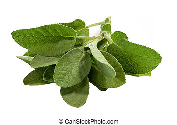 Sage Leaves - Fresh sage leaves isolated on white close up
