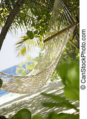 tropical beach: hammock in a garden near the sea