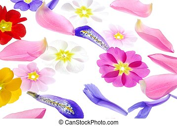 flower petals - Close-up of different flower petals against...