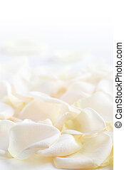 Rose petals - Abstract background of fresh white rose petals