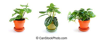 Assorted houseplants - Assorted green houseplants in pots...