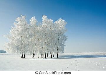 invierno, paisaje, árboles