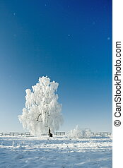 Winter landscape - Cold winter day, beautiful hoarfrost and...