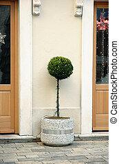cristmas tree on a street - green tree take a shape of...