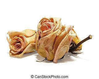 dead roses 08 - dry dead roses