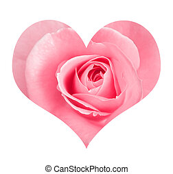 Stylized love symbol - Rose In love shape isolated on white...