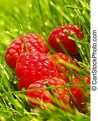 Raspberries - Freshly picked raspberries photographed in a...