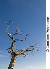 Tree on blue sky