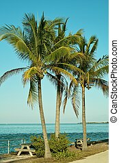 Seaside Oasis - A relaxing spot under palm trees and next to...