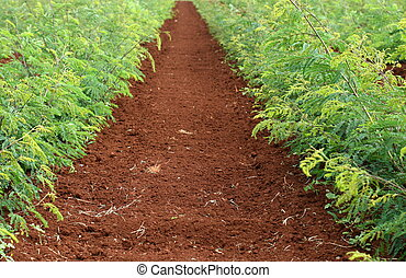 Rich soil stock photo images 866 rich soil royalty free for What is rich soil called