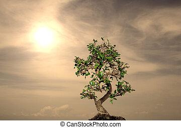 sunny alone bonsai - bonsai concept 1