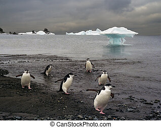 platoon of police chinstrap penguins