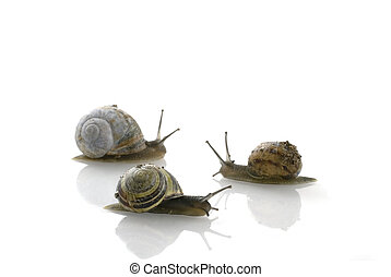 An other direction - One snails choose for an other...