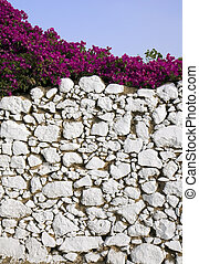Stone wall and bougainvillea - A decorative whitewashed...