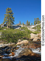 Mountain forest in spring - Northern Sierra Nevada mountain...
