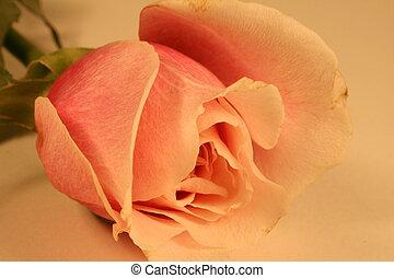 anticaglia, rosa