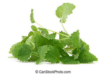 lemon balm on white background, natural shadow underneath