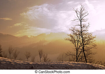 Winter scene - Winter landscapes with frozen snow in the...