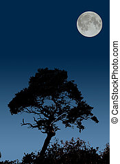 moonrise over silhouetted tree; graduated sky