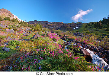 Mountain meadow - flwoery meadow and stream high in the...