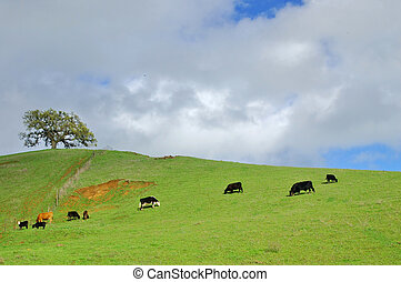 verdant hillside - verdant green hillside in spring with...