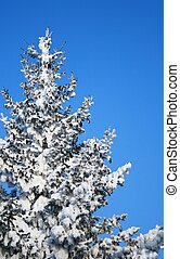Fragment of snow-covered fir-tree. Please see some similar...