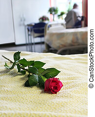 empty bed in hospital  - rose on empty bed in hospital