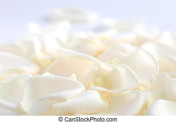 Rose petals - Abstract background of fresh pale rose petals