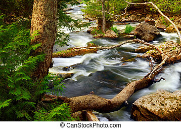 River rapids - Rocky river rapids in wilderness in Ontario,...