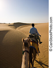 Camel safari - First person view of a camel riding...