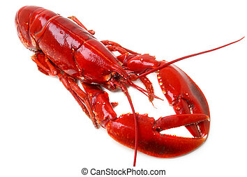 whole red lobster isolated on white background