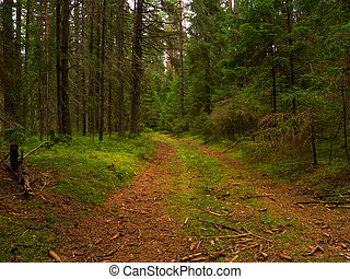 Wilderness footpath - overgrown footpath in a dense forest
