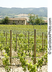 vineyards in Italy with a house