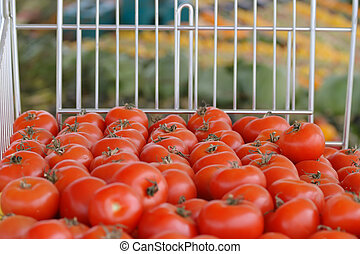 Tomatoes on display in a market