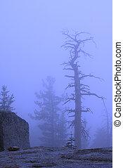 Dead Trees in Blue Fog