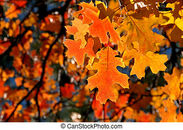 Red Oak Leaves - Brilliant Red Autumn Oak Leaves