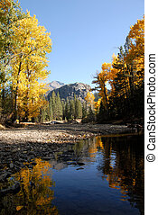 Autumn Cottonwood - Western Freemont Cottonwood Trees in...