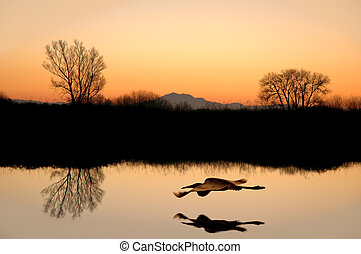 Silhouetted Tree Reflections