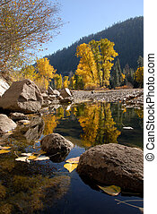 Autumn Cottonwood - Reflection of Western Freemont...