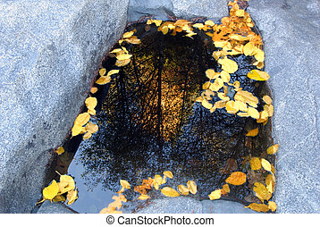 Autumn Leaves - Trees and Yellow Autumn Leaves Reflected in...