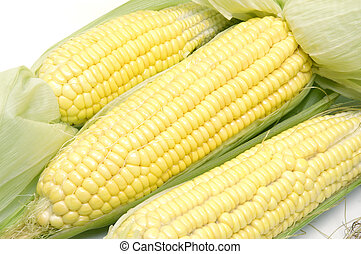 Corns - Freshly peeled sweet corns
