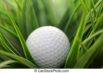 In The Rough - Close-up of a golf ball in the rough grass...