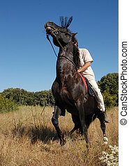 afraid horse - afraid black stallion with man in a field