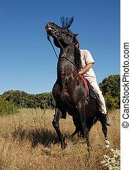 Pferd, ängstlich